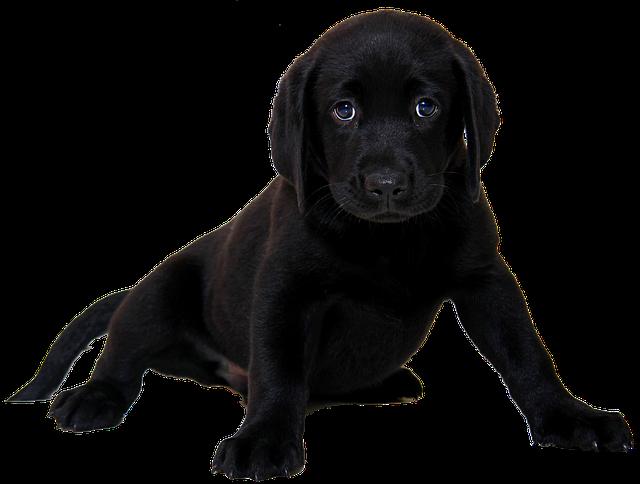 Hundelemmen til din hund