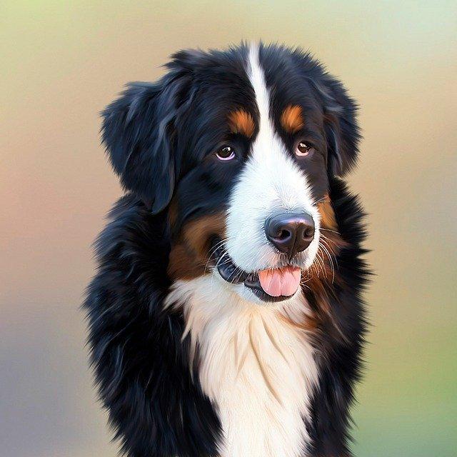 Staywell 660ML alu – hundelemmen til den helt store hund